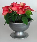 violakwiatysreb175